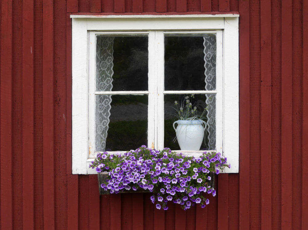Flower box placed against a Swedish home painted in traditional red with white window frame containing purple flowers.