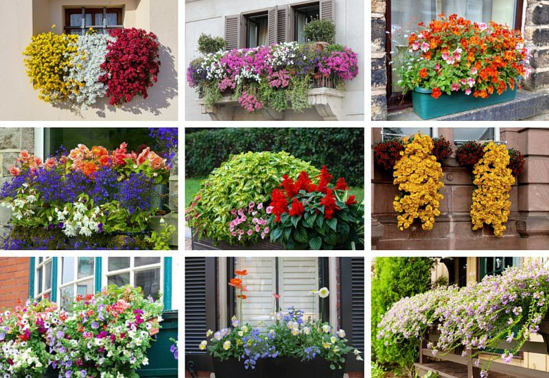 40 Window And Balcony Flower Box Ideas PHOTOS Home Stratosphere Gorgeous Designs For Pots Decoration