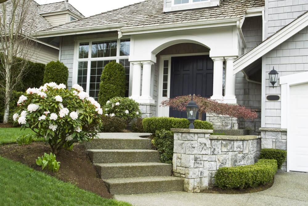 These white Rosebay shrubs with its white blossoms steal the moment at the door step.
