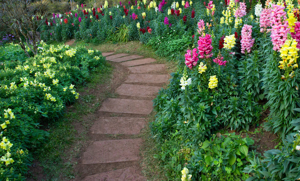 Rectangular pavers set in the soil lining a curving path. Colorful hyacinths are paving their way just like as the pathway does.