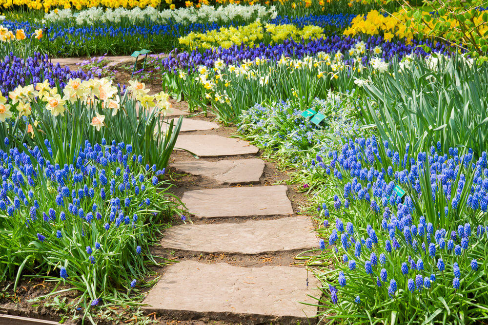 A variety of spring flowers parading as the flagstones fall in the center line. Present are daffodils, tulips and hyacinths in yellow, blue, white and purple blossoms.