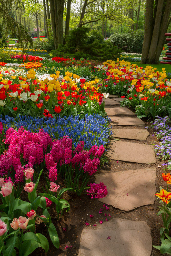 Large flagstone pavers will walk you through a paradise of lilies, tulips, hyacinths and daffodils.
