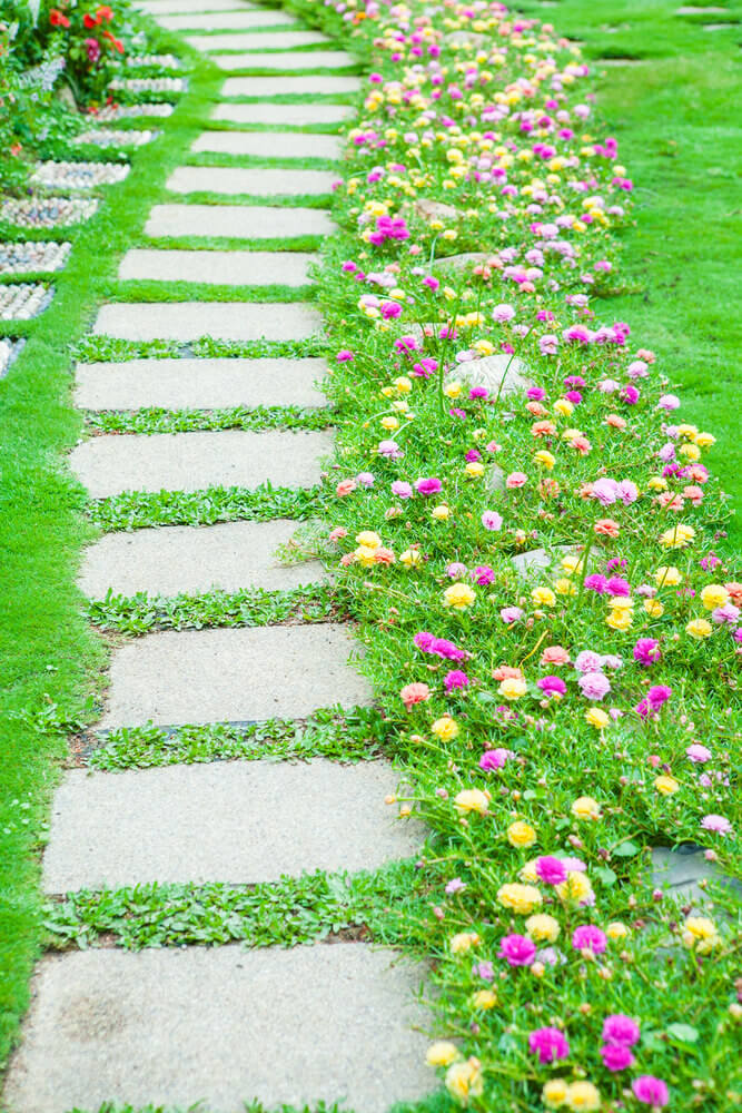 Portulaca flowers give life to the empty stepping stones.