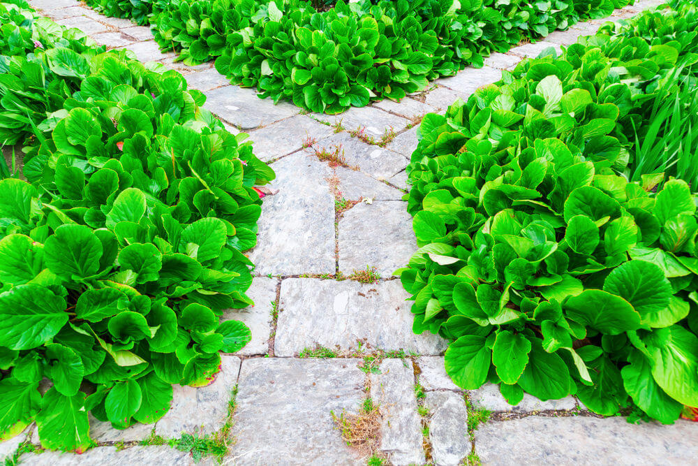 Block paving seems natural, while healthy green bushes try to get loose on the pathway's surface.