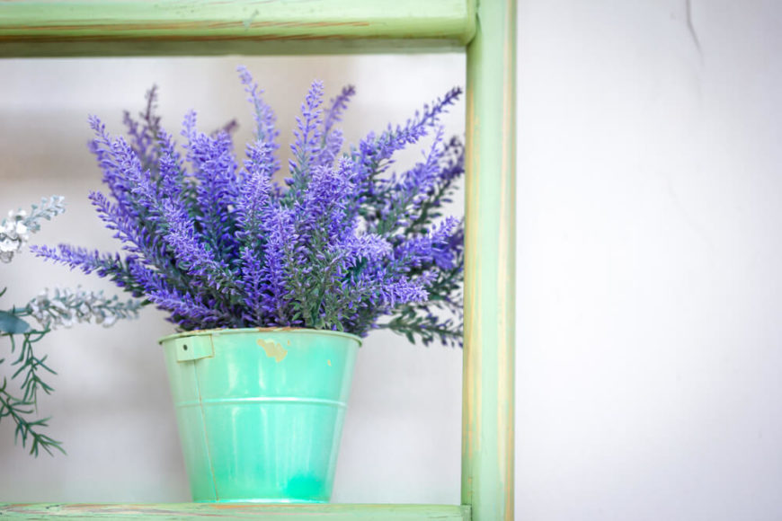 The scent of lavender is highly prized, and is often associated with restful sleep and reduced anxiety. Lavender is thought to help by slowing down your heart rate and lowering your blood pressure.