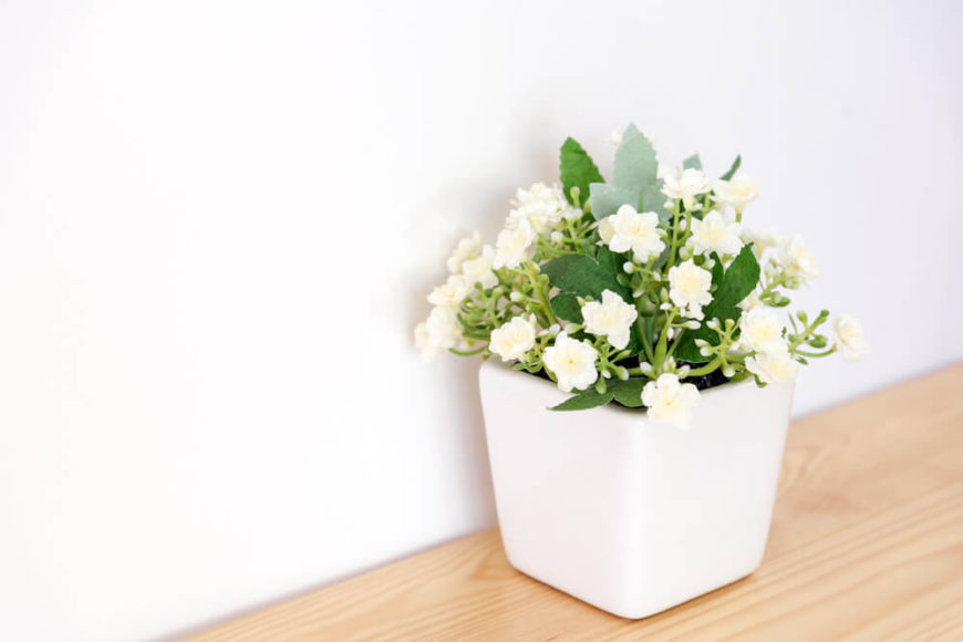 Jasmine has a beautiful, gentle scent and an exotic look that many homeowners love. It's thought to help reduce anxiety levels, which can help you fall asleep and stay asleep longer. And good sleep leads to better productivity during the day!