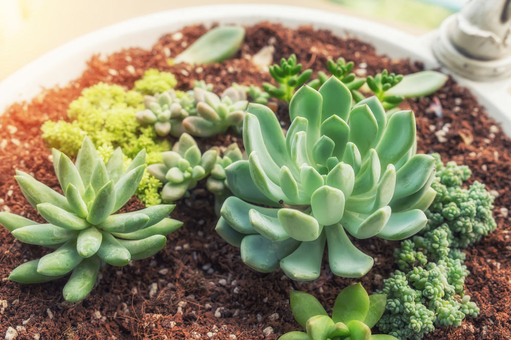 succulent plants to remove odors