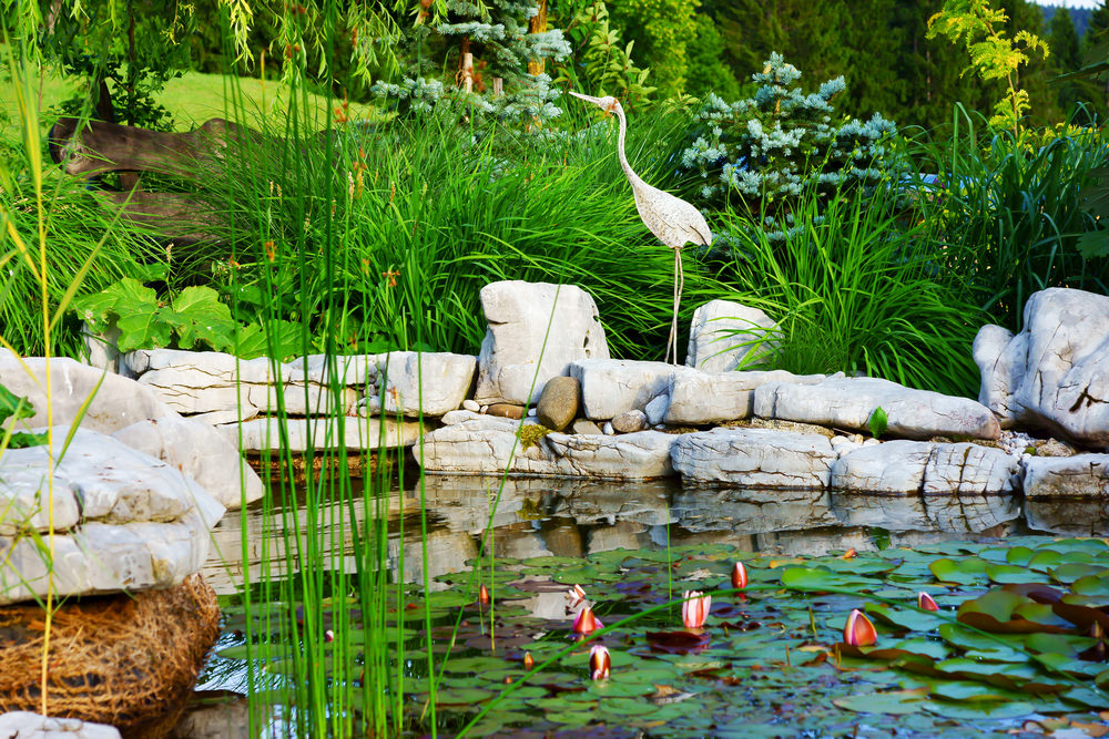 Beautiful water lilies, tall grasses and a nice metal tropical bird give this pond and nice wild feel.