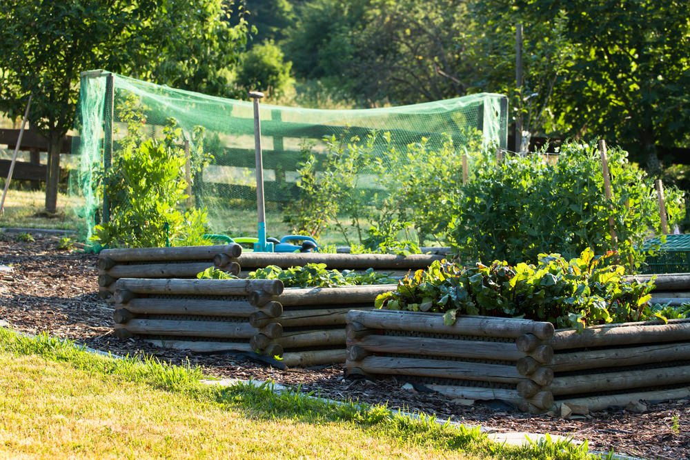 For those prized roses, sometimes it's necessary to have protective netting around your garden.
