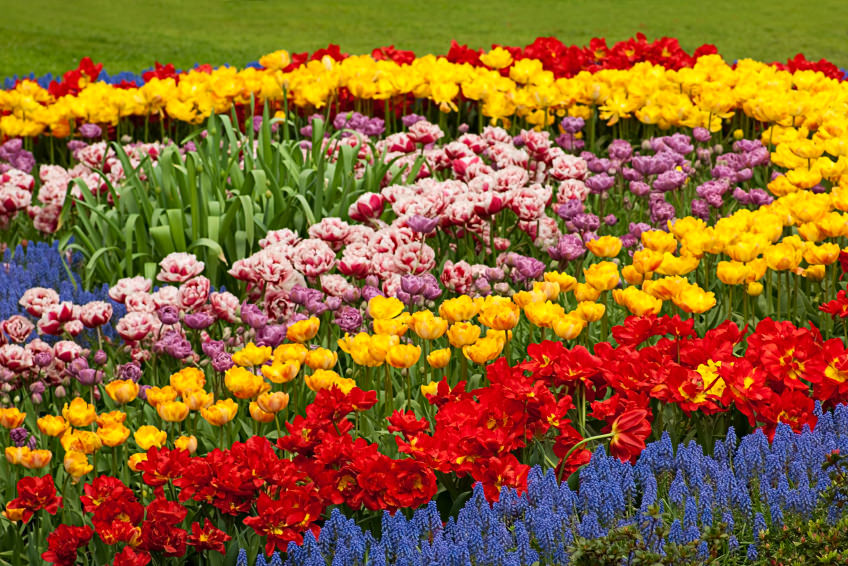 Raining daffodils, tulips and hyacinths in bright red, yellow, blue, pink and purple blossoms. They are planted symmetrically in line, flaunting their own colors and beauty.