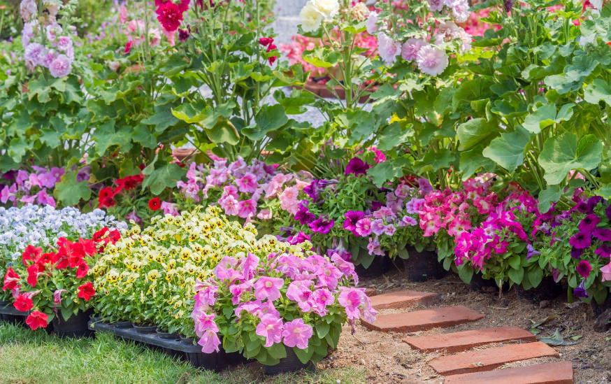 A Brick walkway with containers of pink, red, purple and plenty of greenery.