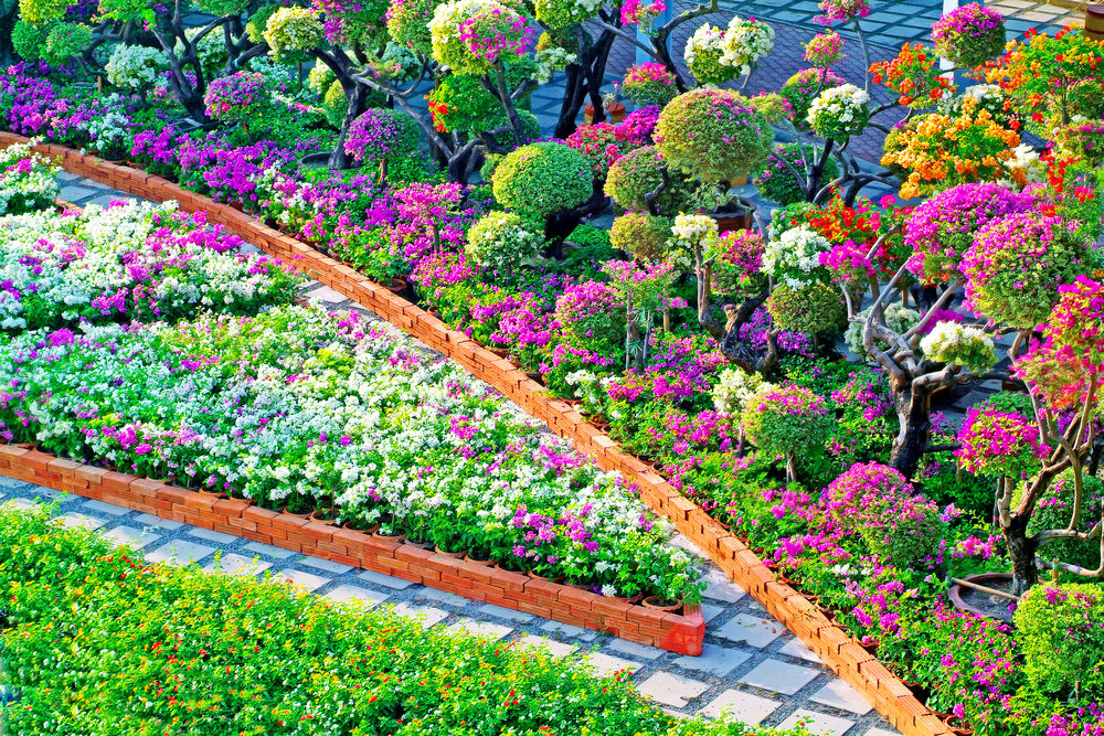 This is indeed a splendid view with all of the colorful blossoms. Topiary of blooming plants and purple blooms lining along the brick curb while the purple and white blossoms of petunias fill in the flower box.