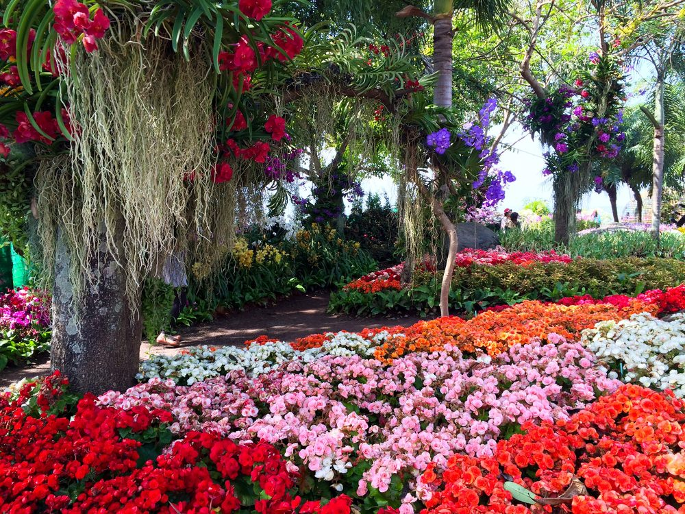 A bed of colorful petunias carpeting the grounds. Present are red, pink, oranges and white petunias.