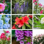 15 Plants to Avoid Growing in Your Garden