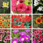 19 Perennial Flowers for Sun (Gorgeous)