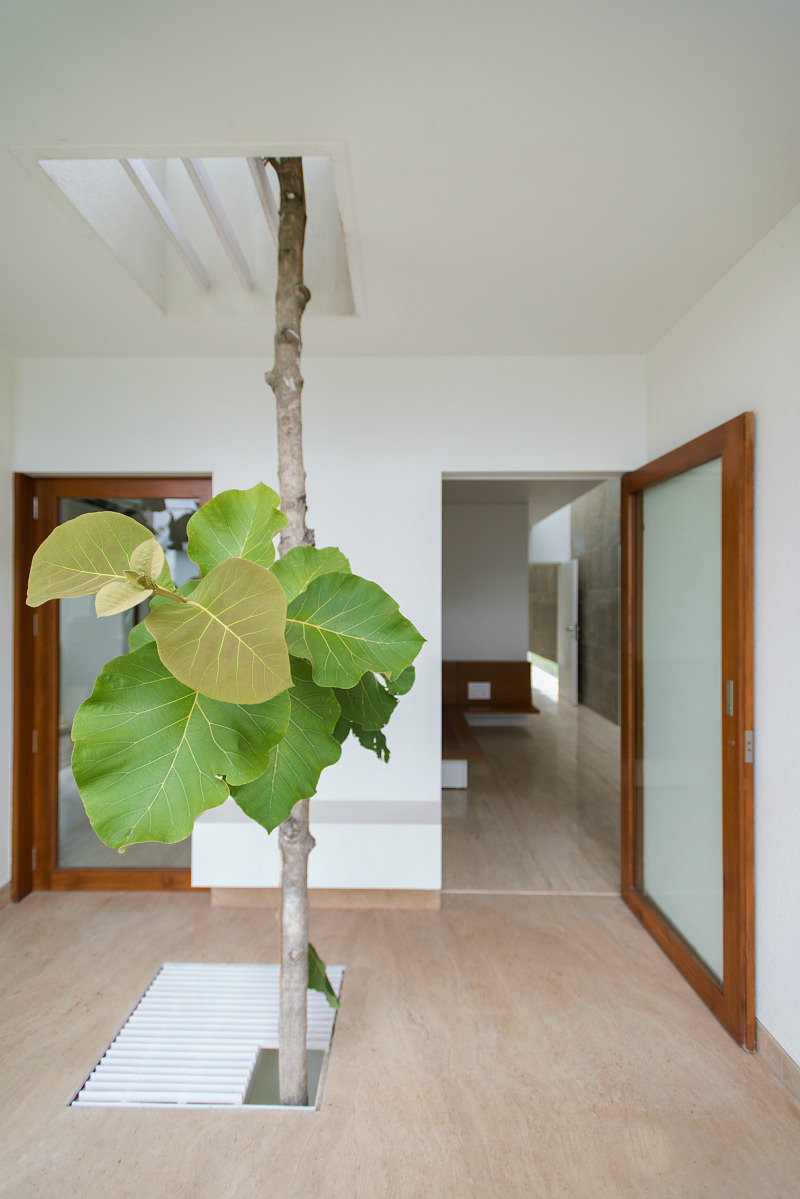 Home in India with a tree growing through the center of it.