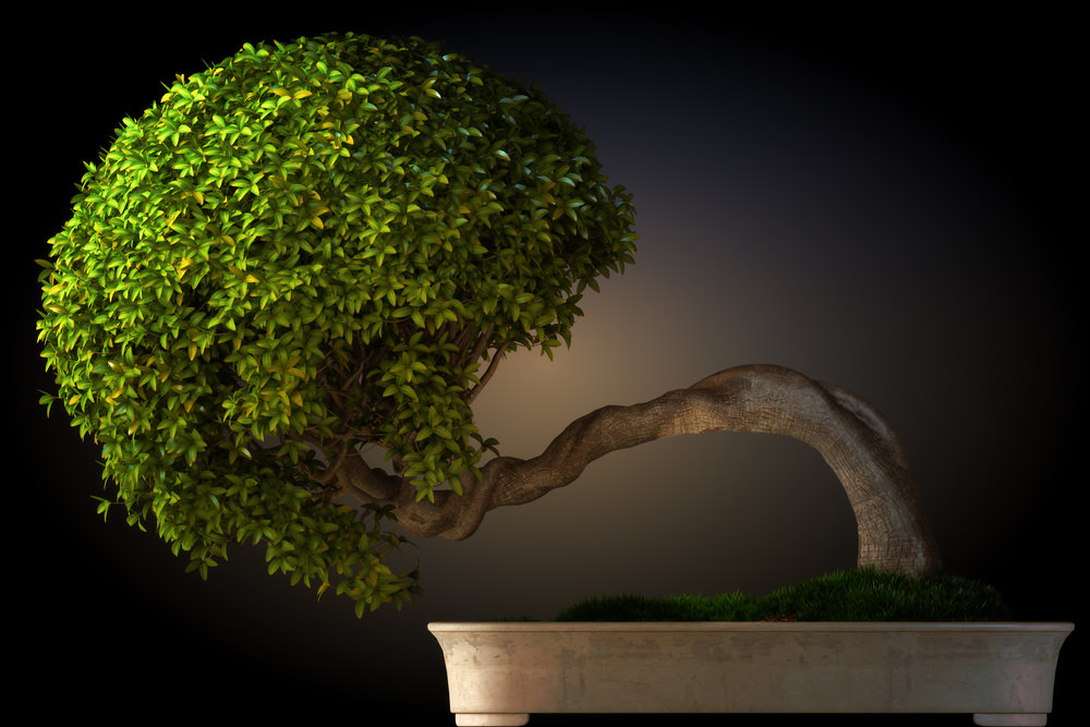 3-bonsai-tree
