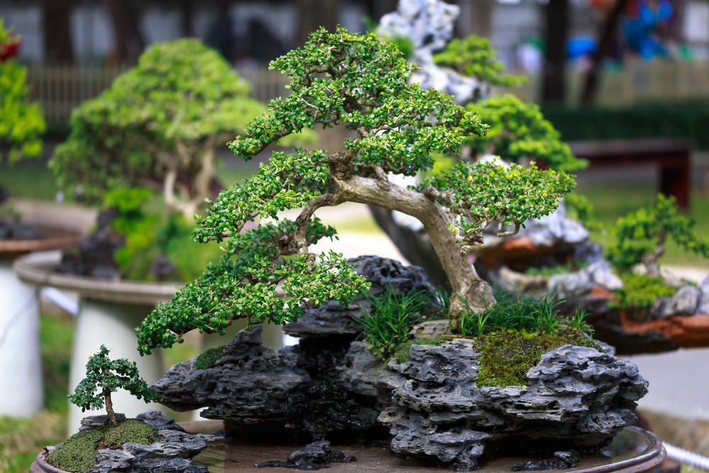 23-bonsai-tree