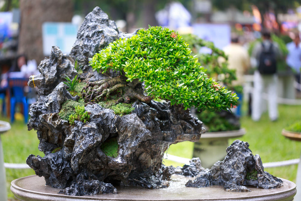 Bonsai Tree Growing in a Rock