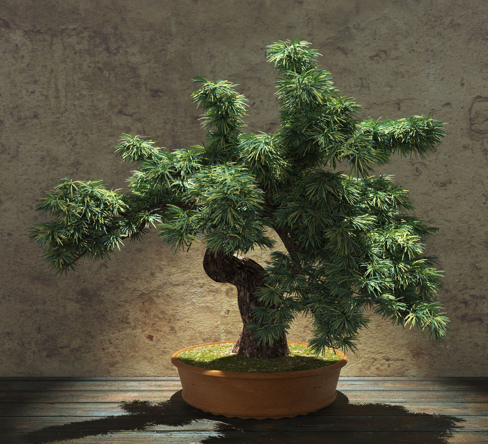 54 Pictures Of Bonsai Trees (by Style And Shape