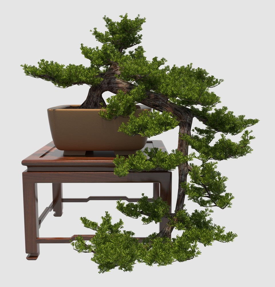 Cascading Bonsai