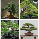 54 Pictures of Bonsai Trees (by Style and Shape)