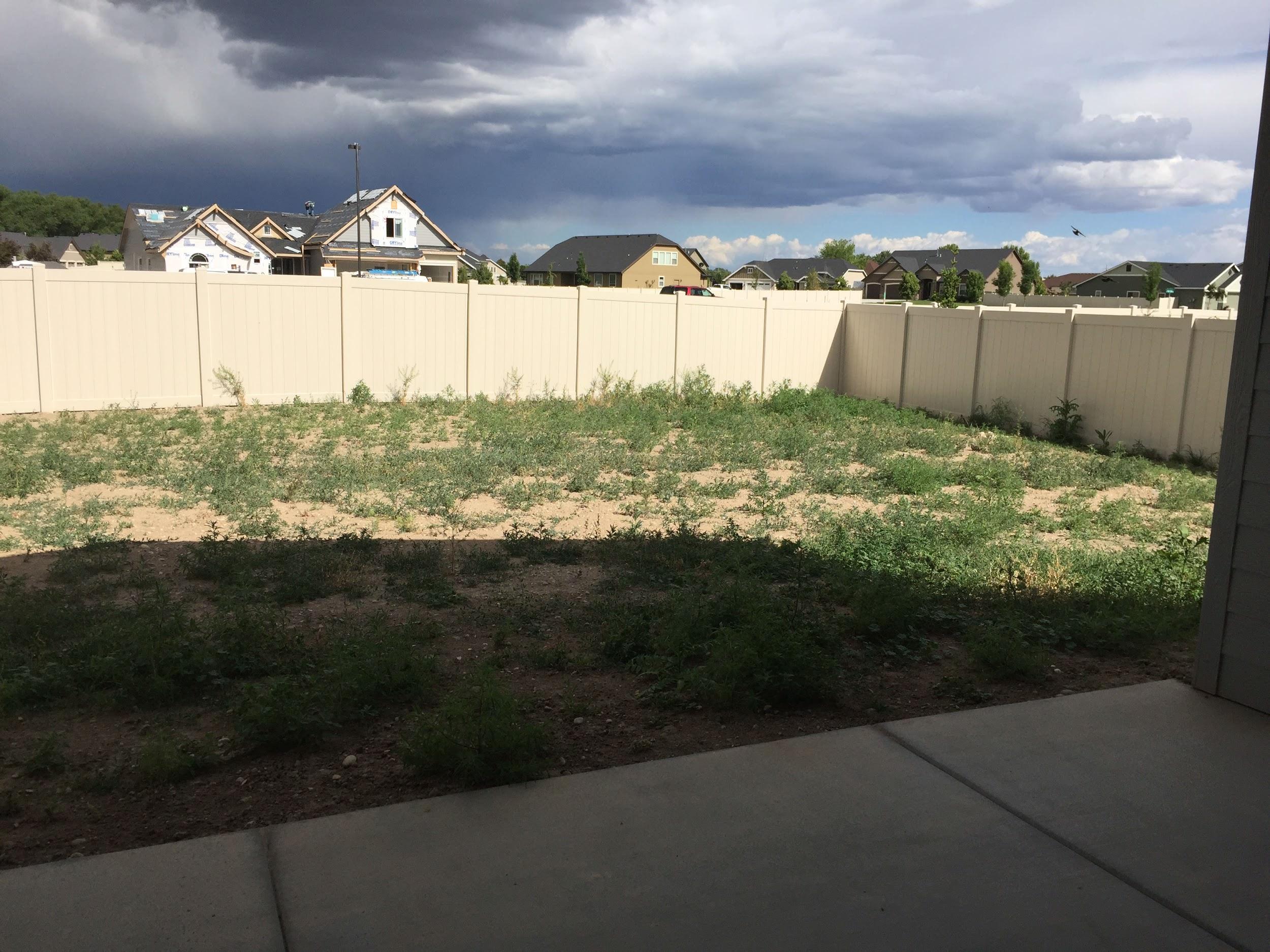 Backyard before installing timer sprinkler