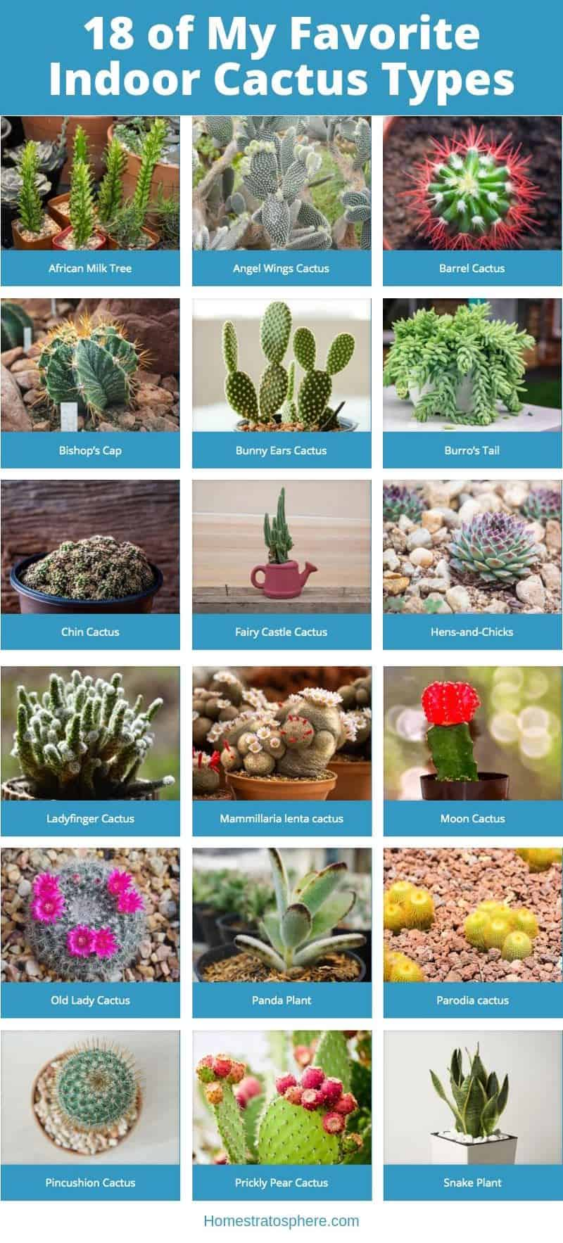 Favorite indoor cacti collection of photos