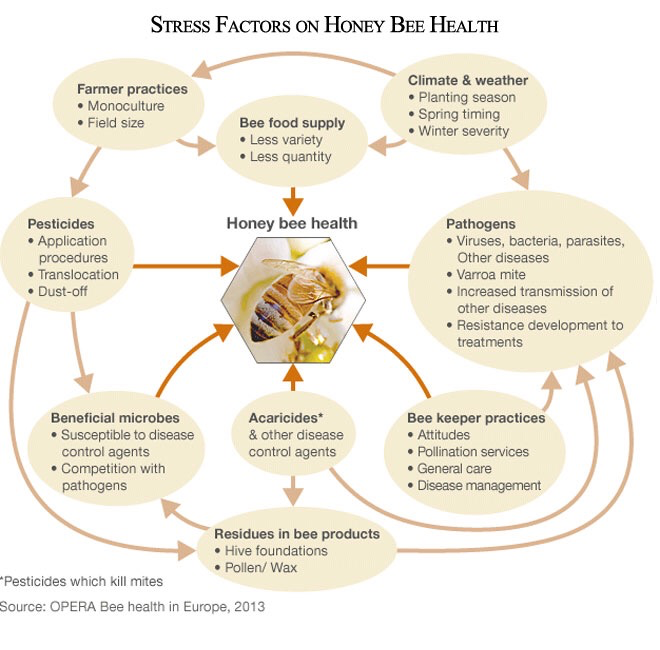 Stress Factors on Honey Bee Health