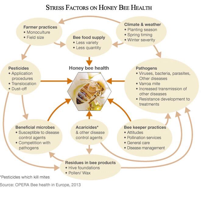 Stress Factors on Honey Bee Health