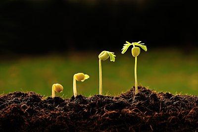 baby plants growing