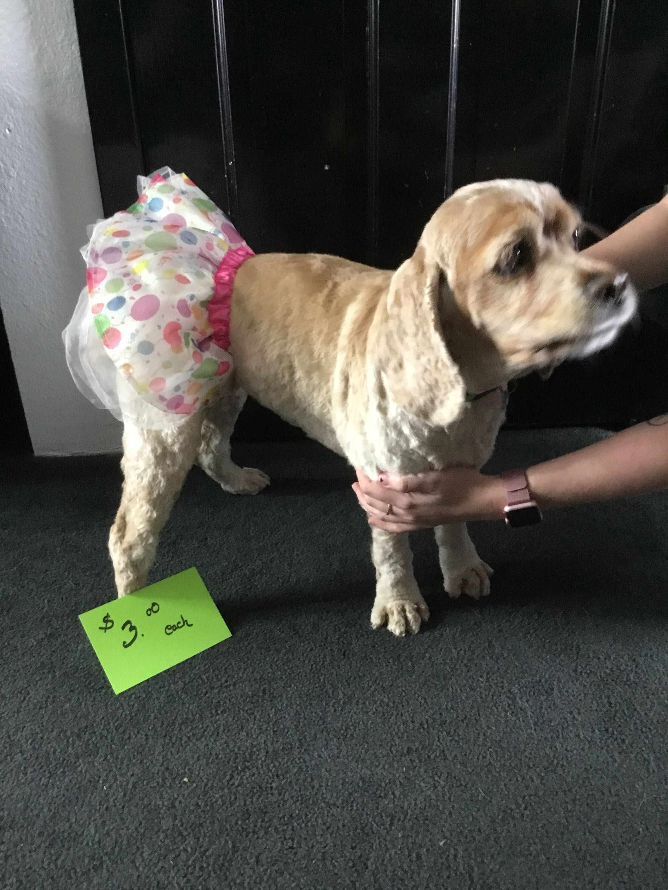 Dog tutu, dog not included 😊