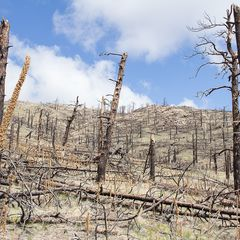 Deforestation colorado 1 preview 1525500342