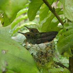 Hummingbird Habitat