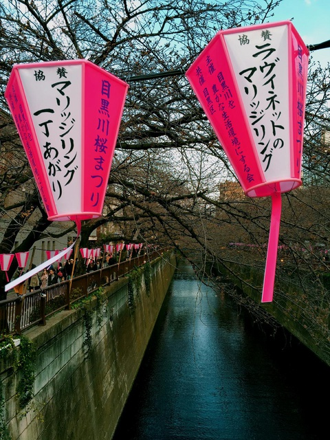 night lanterns to illuminate cherry blossoms at night