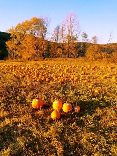 scavenger hunt in the pumpkin field