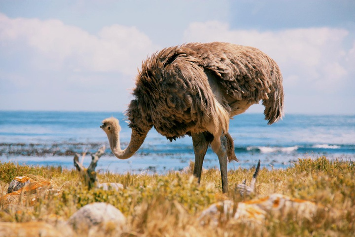 a Cape Point resident