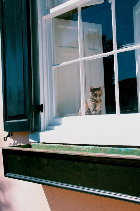 an alert kitten on watch