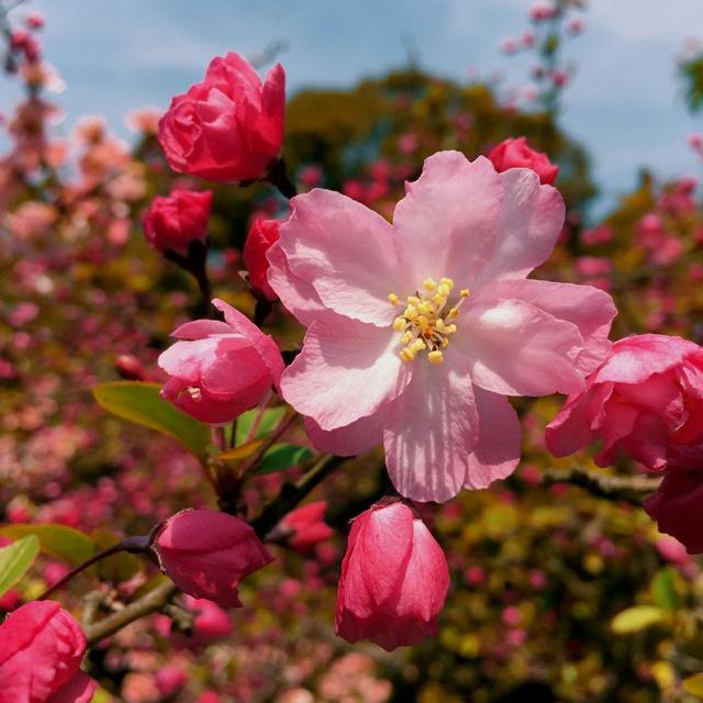 Tokyo Cherry Blossom Trip