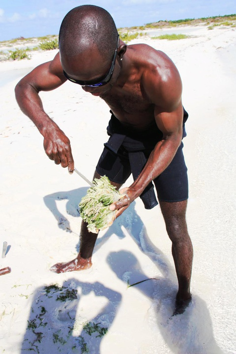 fresh-made conch salad for lunch