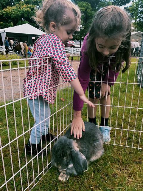 weekend animal fair