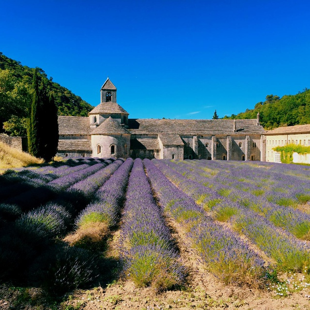 Provence In Lavender Season
