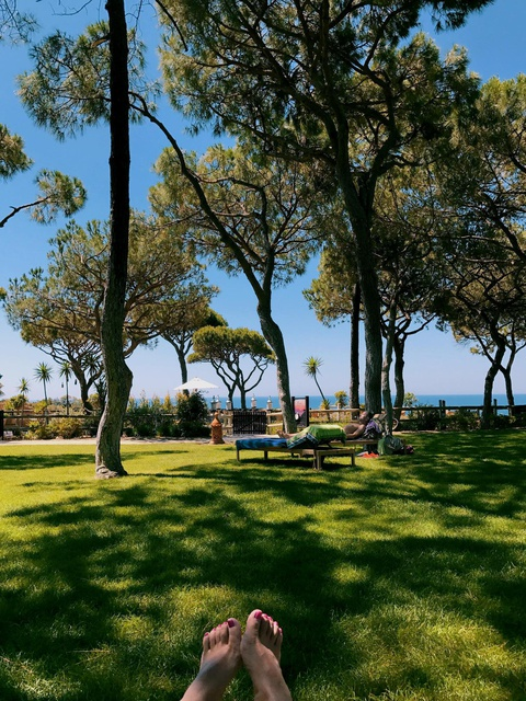sunbathe under the pine trees