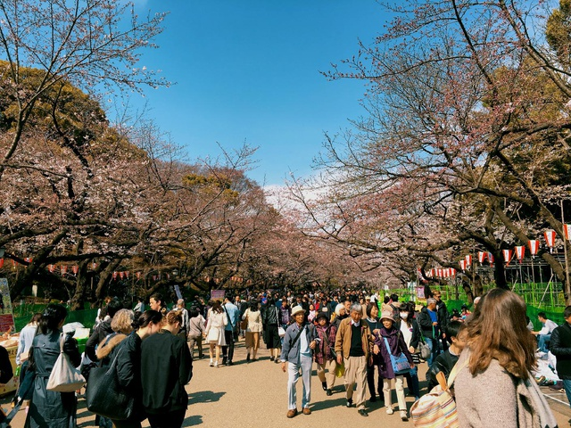 the famous cherry blossom promenade but we were a bit early