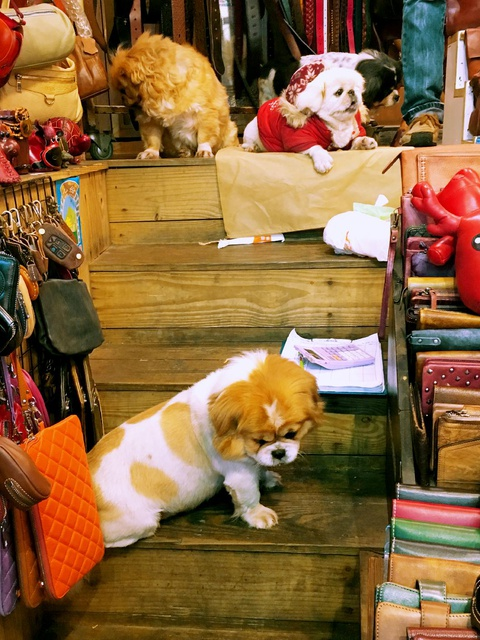 cute dogs help sell bags