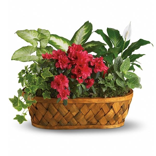 Plants Galore Planter