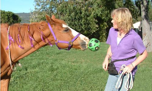 horse trick ball