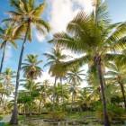 11739_Melia Punta Cana Beach Resort_3