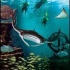 2822_The Reef at Atlantis_8