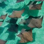 2822_The Reef at Atlantis_10
